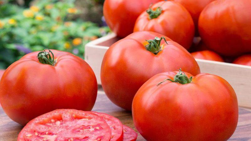 Топ 10 низкорослых томатов для открытого грунта